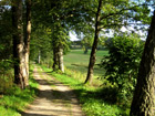 Wald Alexandersbad
