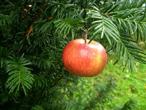 Urvorlage des Weihnachtsbaums