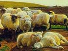 Ausschmitt aus Verirrte Schafe', William Holman Hunt, 1852