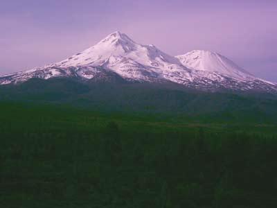 'Mt. Shasta', PSch, 2008