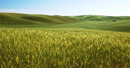 'A field of ripening barley' Victor Szalvay, 2006
