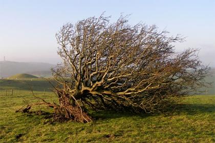 'Uprooted tree on Bronkham Hill',  2006, Jim Champion