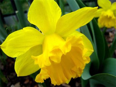 'Narcissus', 2007, Johnathan J. Stegeman