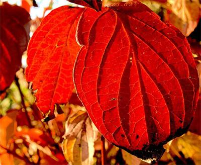 'Autumn leaves', 2006, Guido Gerding
