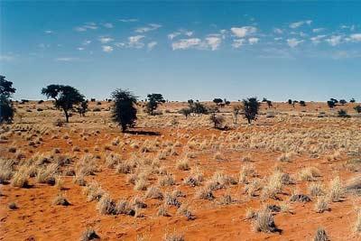 'Kalahari in Namibia', 2003, Elmar Thiel