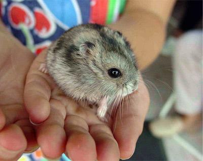 'Hamster', Luis Miguel Bugallo Sánchez, 2005