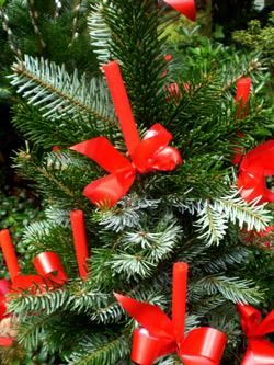 Weihnachtsbaum am Südfriedhof