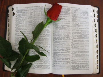 'A Bible', 2007, Vortix