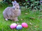 Ostern und Osterbräuche