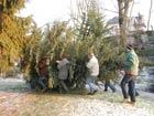 19. Dezember 2009 - Wie kommt der Weihnachtsbaum in die Bergkirche?